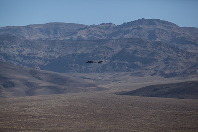 Stealth_F-117-0571