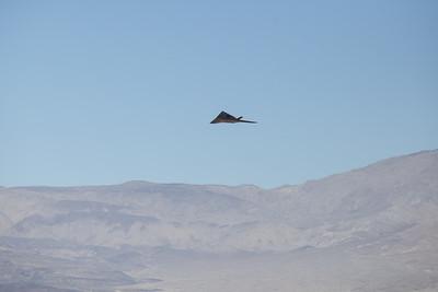 Stealth_F-117-0581