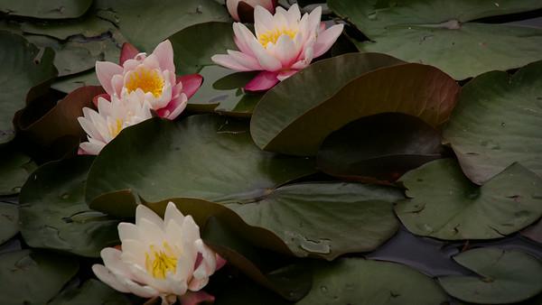 Steamboat Springs Botanic Gardens