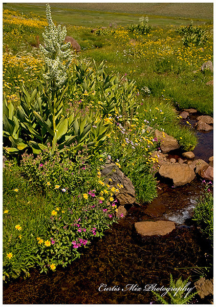 Naturally landscaped stream.