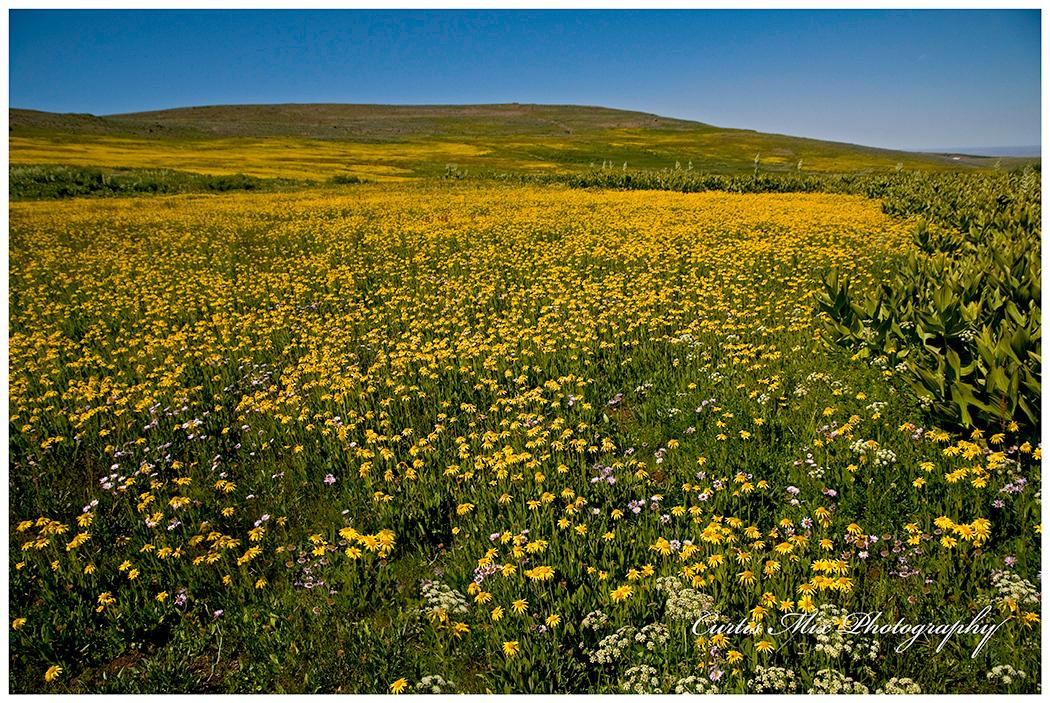 Huge sloped meadows of wildflowers.