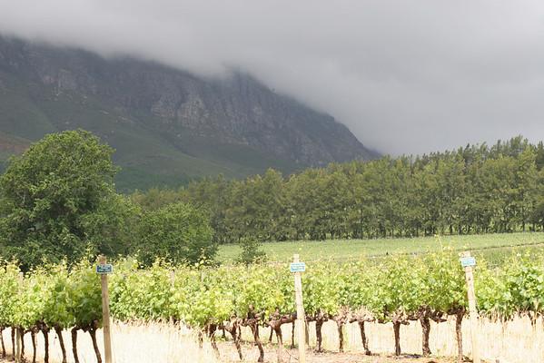 Stellenbosch Wine Route (2008)