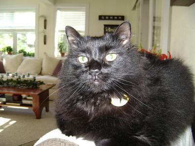 Lura's Black Cat
