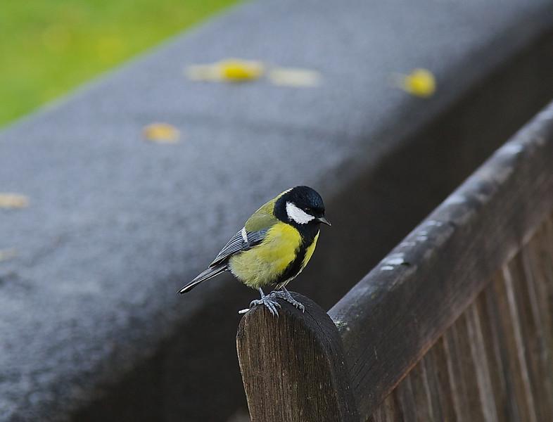 Bird on a bench in Skansen, Stockholm