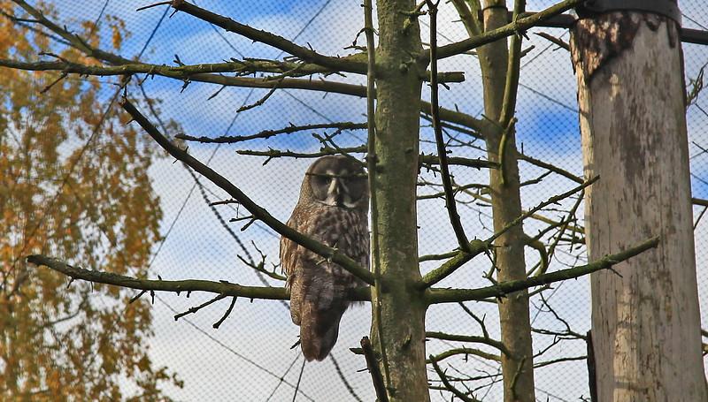 Owl in Skansen, Stockholm
