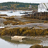IMAGE 19: A scene from the other side of the lobster weighing station at low tide.