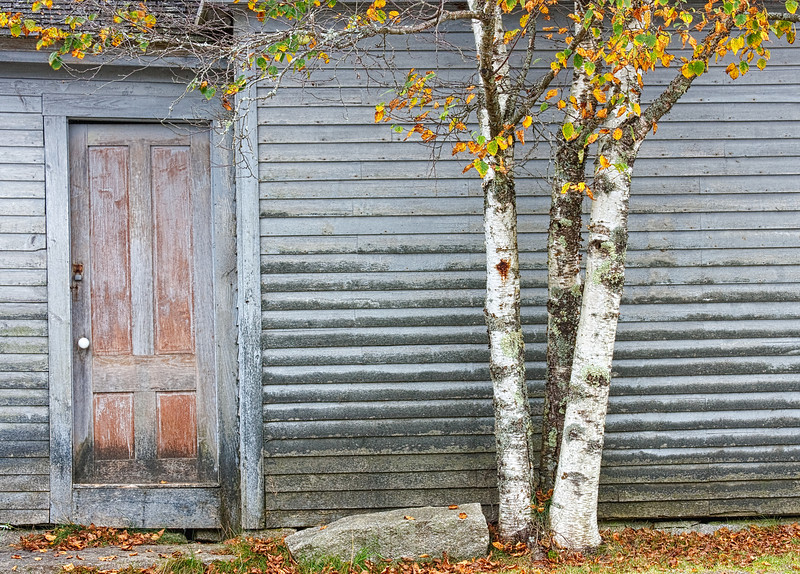 IMAGE 23: Old unoccupied shack with a colorful birch tree.