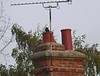 Blackbird in Snitterfield kept going in and out of chimney