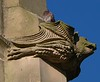 Pigeon on gargoyle