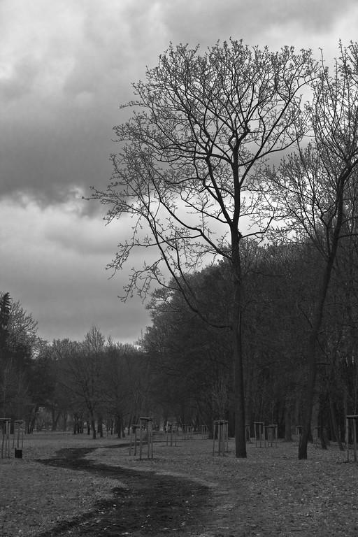 Stromovka 8.2.2009