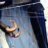 Argali Horns