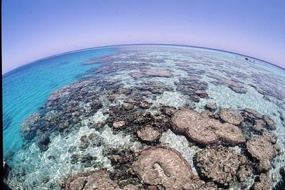 Sanganeb coral reef in Sudan