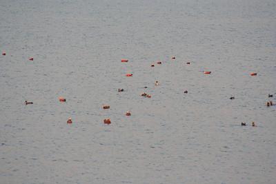 Sukhna Lake feb 2010