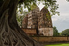 A bodi tree and chedi at Sukhothai