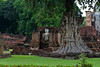 A Buddha statute under a tree at Sukhothai