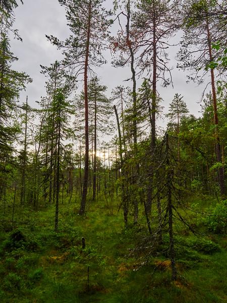 Pyhä-Häkin Kansallispuisto