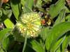 Ooh! Bumblebee!