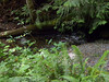 The creek below the falls.