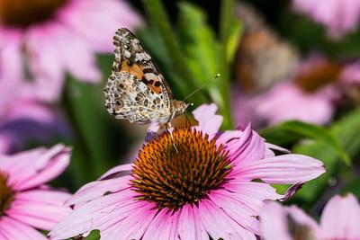 Jul 22 Denver Botanical Gardens on York St.