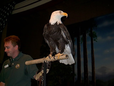 Eagle show <br /> I was only about 5 ft from this bird.