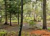 Wild Garden, Sieur de Monts Spring, Acadia NP.