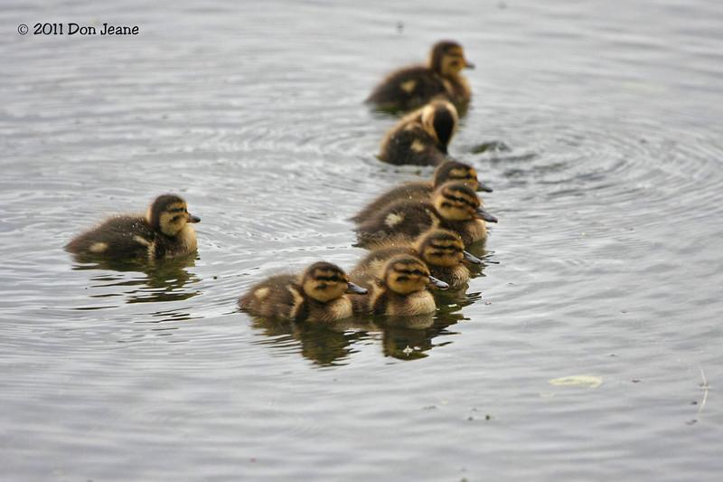 Sackville Waterfowl Park, NB.