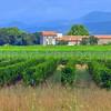Languedoc farmhouse