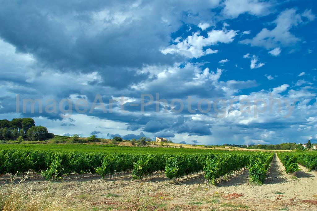 Storm over Vines
