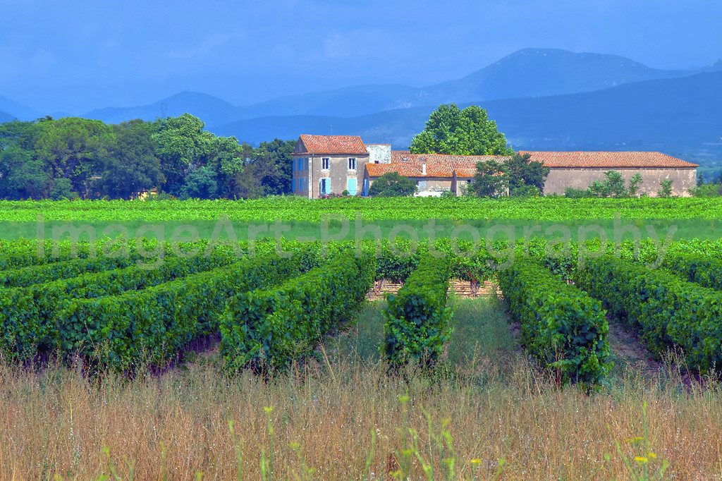 The Languedoc