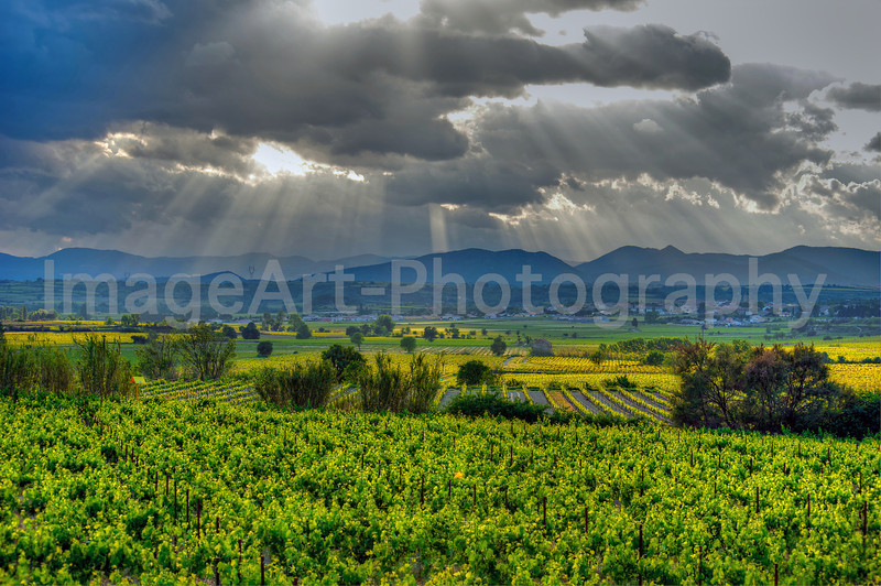 Sunlight over vineyards in the Languedoc