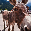 "Donkey, he is my man.<br /> <br />  <a href=""http://sillymonkeyphoto.com/2010/09/08/he-is-a-donkey-one-more/"">http://sillymonkeyphoto.com/2010/09/08/he-is-a-donkey-one-more/</a>"