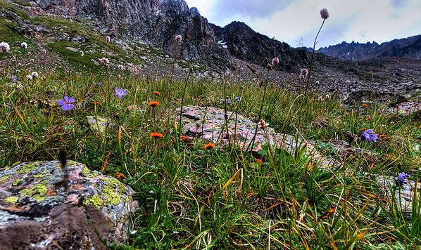Alpine Flowers  http://sillymonkeyphoto.com/2011/02/06/alpine-flowers-2/