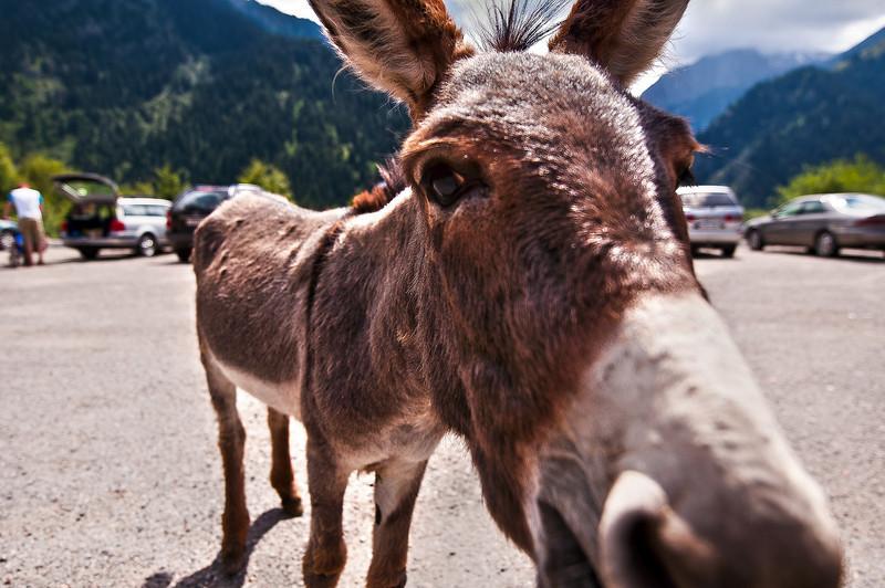 Donkey, he is my man.