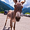 "Donkey, the Parking Lot Attendant<br /> <br />  <a href=""http://sillymonkeyphoto.com/2010/09/01/donkey-the-parking-lot-attendant/"">http://sillymonkeyphoto.com/2010/09/01/donkey-the-parking-lot-attendant/</a>"