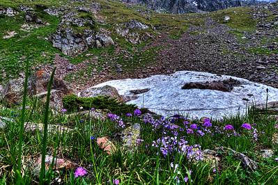 Alpine Summer  http://sillymonkeyphoto.com/2011/03/26/alpine-summer/