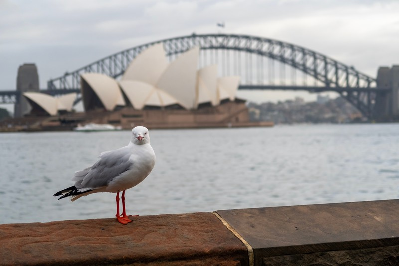 """My first exploration of Sydney was interrupted by this bird who kept squawking something about """"P Sherman, 42 Wallabee Lane, Sydney"""".  Australia is a crazy place y'all!"""