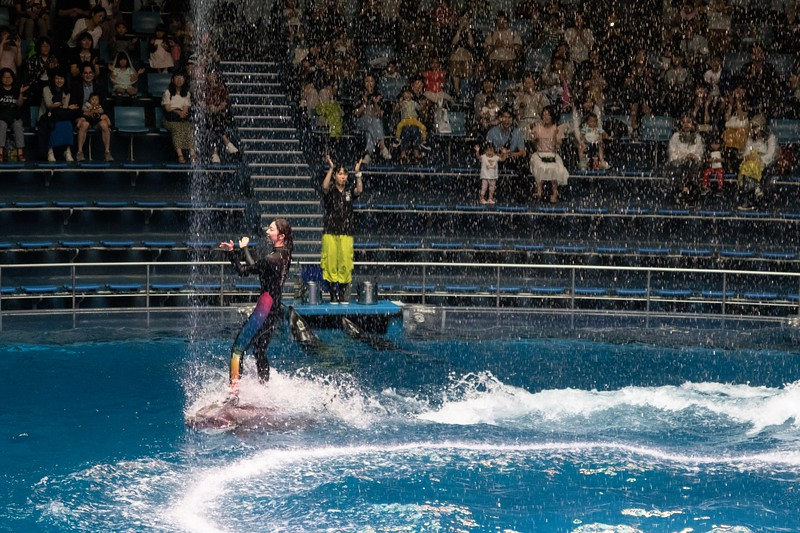 I thought the lady surfing on the dolphin was quite impressive!