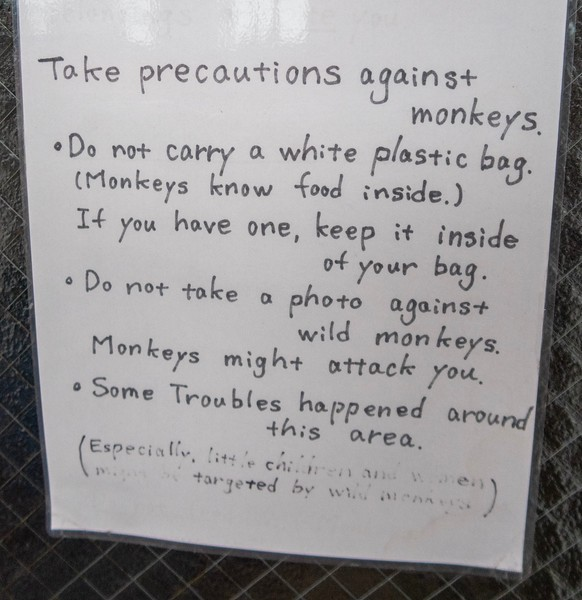 I am very disappointed to report that I did not get to see or fight any monkeys on this trip.