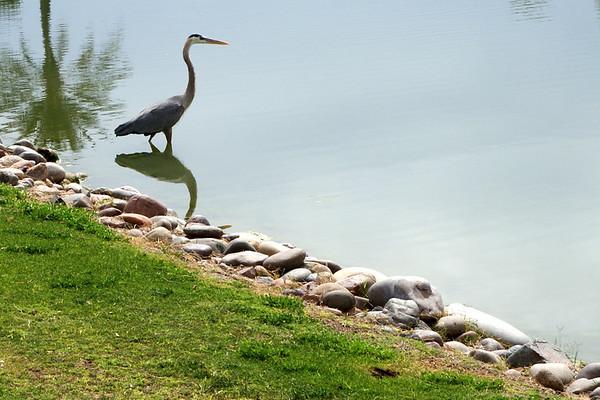 Sun Lakes and Phoenix 2011