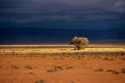Alvord Desert - Tree light