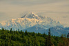 Yes, the Mountain, known as Denali, was out in all its glory for hours on end, 3 days in a row. Mount McKinley is special, and elusive to the distant eye.