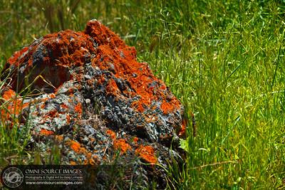 110417_5631_Sunol-Ohlone_Regional_Wilderness