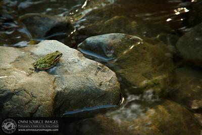 Frog in Sunol-Ohlone Regional Wilderness