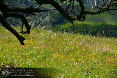 Sunol-Ohlone Regional Wilderness Wildflowers