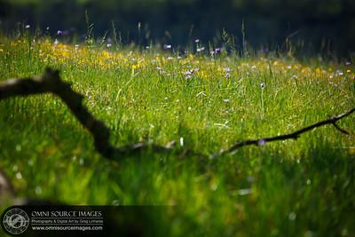 Sunol-Ohlone Regional Wilderness Wildflowers