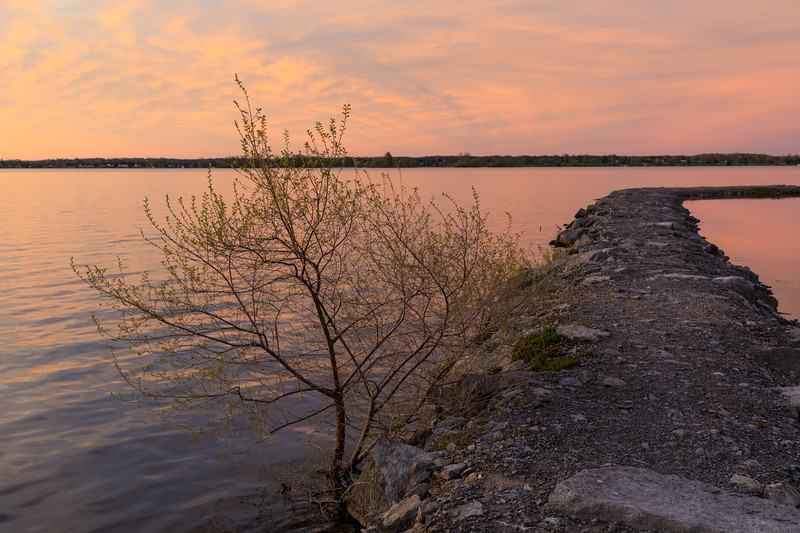Lone tree growing on breakwater at Jane Forrester Park.