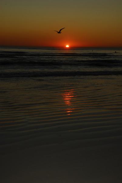 Siesta Key, Seagull Follows