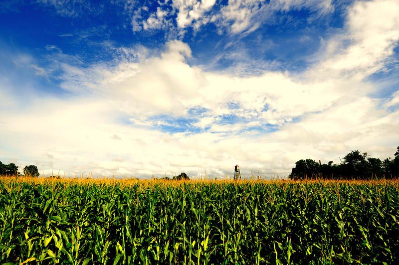 Corn Field North Carolina, Calypso