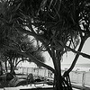 Surfers Paradise Gold Coast x100s  26713