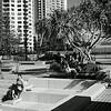 Surfers Paradise Gold Coast x100s  26708